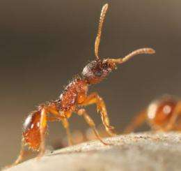 Ants' ecosystem role is 'key'
