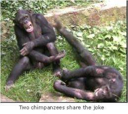 Ape response has social, emotional meaning