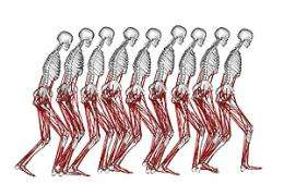 Basis of mobility disorders to be studied using 3-D simulations of patients' movements