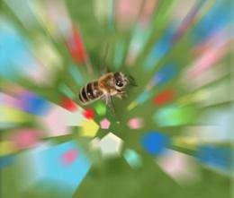 Bees see super color at super speed