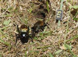 Big Brother in the wild: Natural and sexual selection in wild insect population