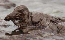 Birds frozen in oil: image of a desperate summer (AP)