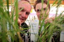 Breakthrough in plant-fungi relationship