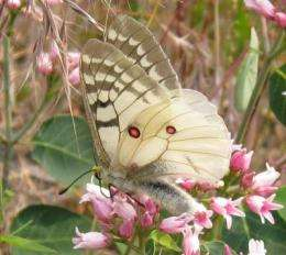 Butterflies reeling from impacts of climate and development