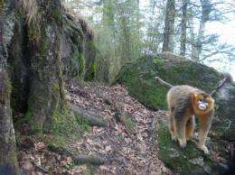 Candid cameras give a chance to see wildlife as a scientist does