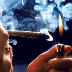 Study links cannabis strains with memory impairment