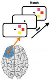 Damage to prefrontal cortex compensated by intact areas, showing flexible nature of memory