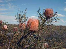Extinctions, loss of habitat harm evolutionary diversity