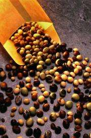 Fats for health and beauty: Giving soybean oil a new role in serving society