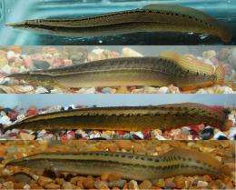 First images of 4 new spiny eels