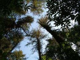 Forest epidemic is unprecedented phenomenon, still getting worse