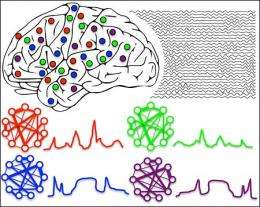 For neurons to work as a team, it helps to have a beat