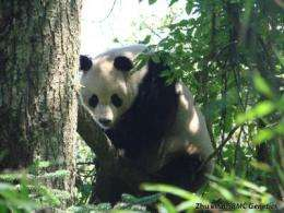For pandas, there is a mountain high enough, there is a valley low enough