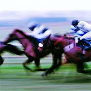 Genes and athletic performance in Thoroughbred horses