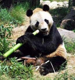 Are pandas in japan