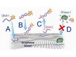 Graphene-DNA biosensor selective, simple to create