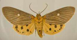 Hidden habits and movements of insect pests revealed by DNA barcoding