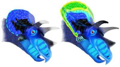 Study finds Triceratops, Torosaurus were different stages of one dinosaur