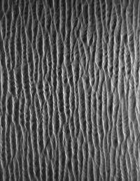 In deserts, which dunes are the most stable?
