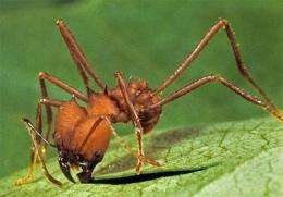 Insect research gives humans six legs up