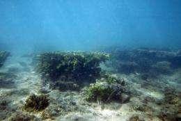 Japan is believed to have abundant underwater resources