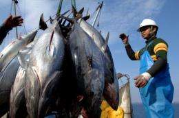 Japan's annual catch of young bluefin tuna is said to have averaged 4,500 tonnes between 2002 and 2004