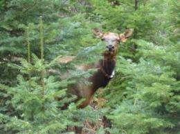 Modeling study identifies characteristics of high elk-use areas in western Oregon, Washington