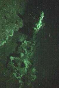 More deep-sea vents discovered