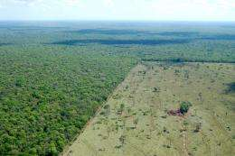 Most new farmland comes from cutting tropical forest, says Stanford researcher