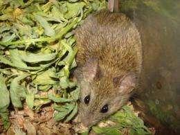 Mountain mice show adaptation to altitude