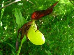 Natural reforestation in southern Pyrenees favors orchid