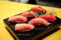Nearly 80 percent of each year's bluefin catch is shipped to Japan, where it is eaten raw as gourmet sushi and sashimi