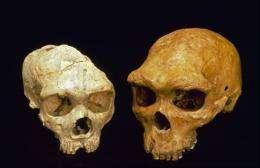 New ancestor? Scientists ponder DNA from Siberia