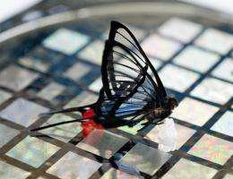 New high-sensitivity electronic skin can feel a butterfly's footsteps
