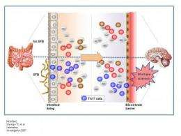 Of bugs and brains: Caltech researchers discover that gut bacteria affect multiple sclerosis