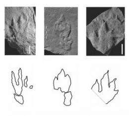 Oldest evidence of dinosaurs found in Polish footprints