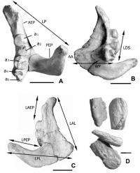 Oldest-known black carp found in Mongolian plateau