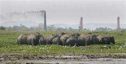 Panel: India must secure elephant reserves (AP)