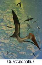 Prehistoric winged beasts 'pole-vaulted' into flight (w/ Video)