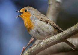Quantum robins lead the way