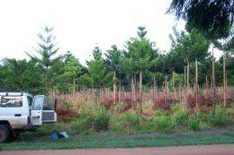 Reforestation projects capture more carbon than industrial plantations, reveals new research
