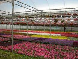 Rotating high-pressure sodium lamps provide flowering plants for spring markets