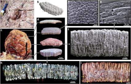 Sauropods in Argentina kept their eggs warm near geothermal vents
