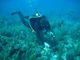 Scientific coral reef survey to be conducted in Bonaire
