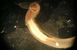 Shipworm threatens archaeological treasures