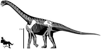 New 'thunder-thighs' dinosaur discovered (w/ Video)
