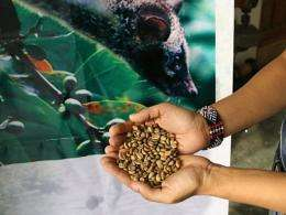 Special coffee beans are displayed in front of a poster showing the civet at a company warehouse in Manila