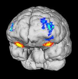 Specific brain areas for sex, money