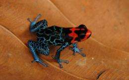 Spectacular new species are being discovered in the Amazon rainforest at a rate of one every three days