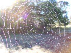 Physicists investigate structural properties of spider webs